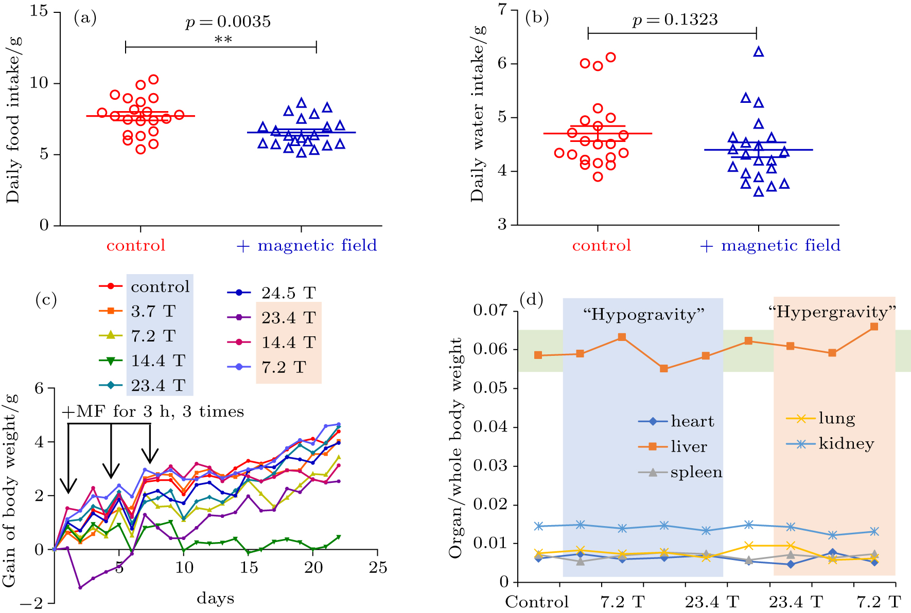 Effects of 3 7 T–24 5 T high magnetic fields on tumor